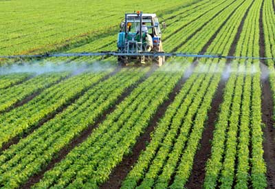 Roundup Injury Risks